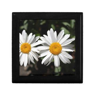 Pretty pure white daisy flowers small square gift box