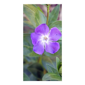 pretty purple flower  photo card