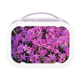 Pretty Purple Flowers Lunch Box