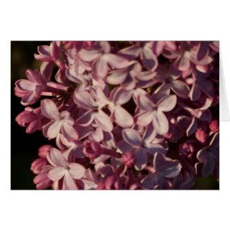 Pretty Purple Lilacs Greeting Card