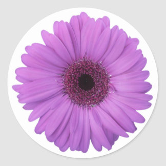 Pretty Purple Photographic Gerbera Daisy Flower Classic Round Sticker