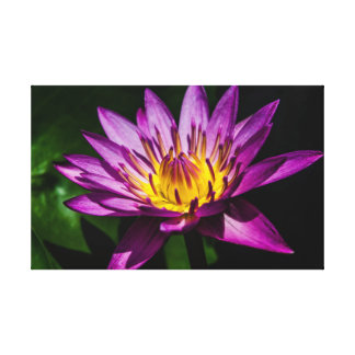Pretty purple water lily canvas