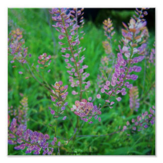 Pretty Purple Weeds Poster