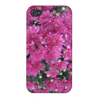 Pretty Raspberry Color Fall Mum Modern Iphone Case iPhone 4/4S Cover