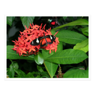 Pretty Red Butterfly Postcard