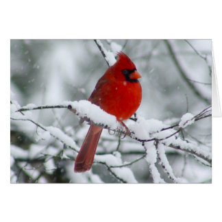 Pretty Red Cardinal in the Snow Card