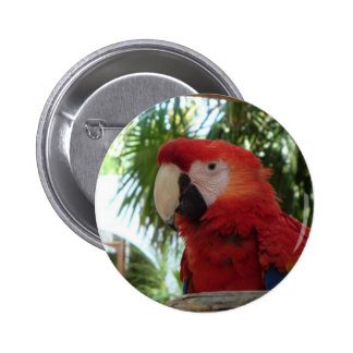Pretty Red Parrot Button