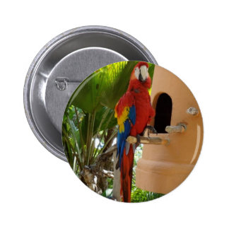 Pretty Red Parrot Pin