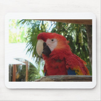 Pretty Red Parrot Mouse Pad