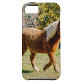 Pretty Shetland Pony Case For The iPhone 5