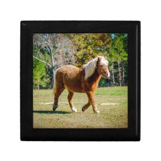 Pretty Shetland Pony Gift Box
