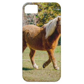 Pretty Shetland Pony iPhone 5 Covers