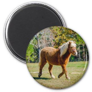Pretty Shetland Pony Magnet