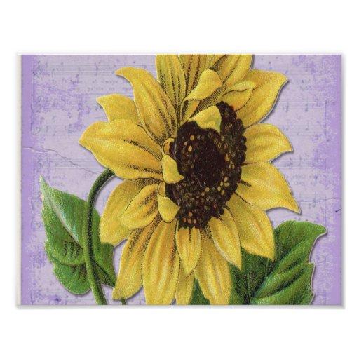 Pretty Sunflower On Sheet Music Photograph