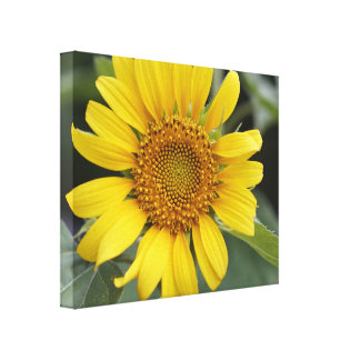 "Pretty Sunny Yellow Sunflower 20"" x 16"" Canvas Print"