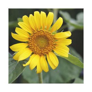 "Pretty Sunny Yellow Sunflower 24"" x 24"" Canvas Print"