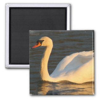 Pretty Swan Magnet Fridge Magnets