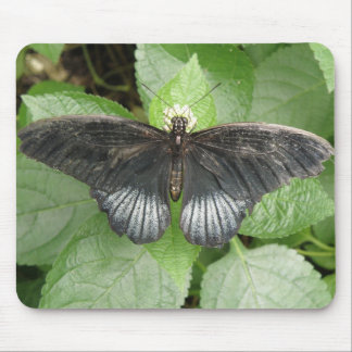 Pretty Tropical Butterfly and Flowers Mousepad