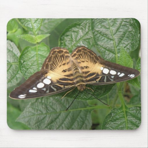 Pretty Tropical Clipper Butterfly Mousepad