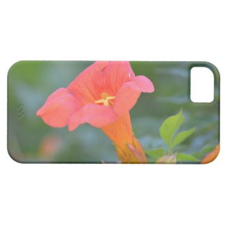 Pretty Trumpet Vine iPhone 5 Covers