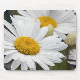 Pretty White Daisies Mouse Pad