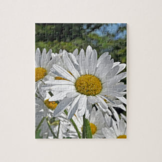 Pretty white daisy blossoms jigsaw puzzle