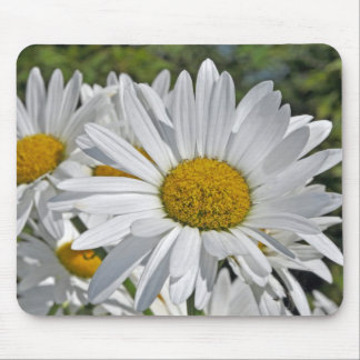Pretty white daisy blossoms mouse pad