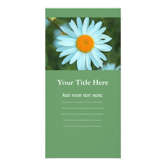 pretty white daisy flowers picture. custom photo card