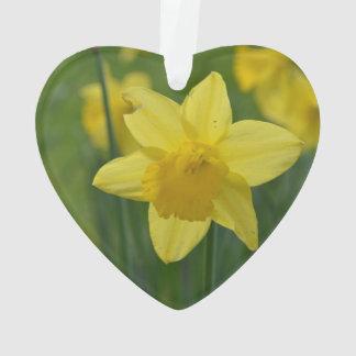 Pretty Yellow Daffodil