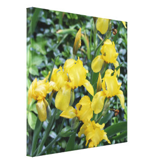 Pretty Yellow Iris Flower Garden Canvas