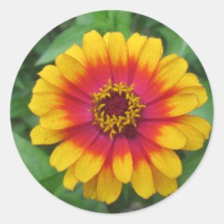 Pretty Yellow Orange Zinnia Classic Round Sticker