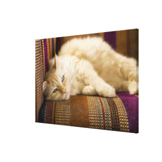 Pretty yellow tabi cat laying on couch. stretched canvas prints