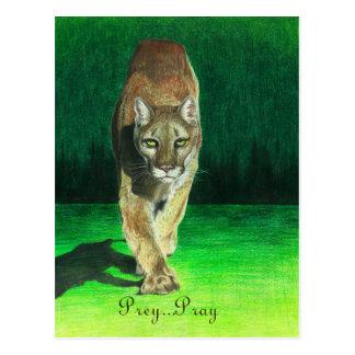 Prey...Pray Cougar Big Cat Postcard