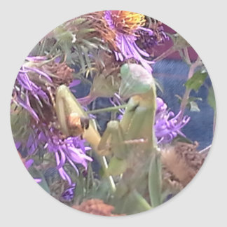 Preying Mantis  & Purple Cone Flowers Classic Round Sticker