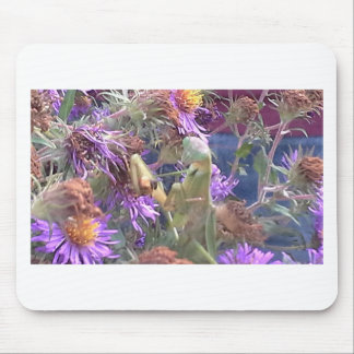 Preying Mantis  & Purple Cone Flowers Mouse Pad