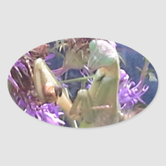 Preying Mantis  & Purple Cone Flowers Oval Sticker