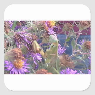 Preying Mantis  & Purple Cone Flowers Square Sticker