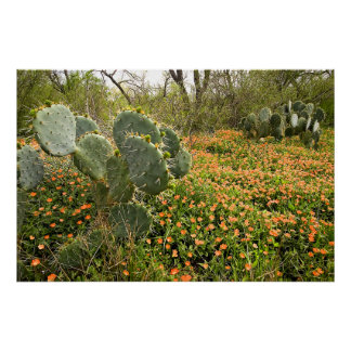 Prickly Pear and Texas Wildflowers Poster