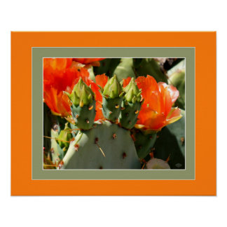 Prickly Pear Apricot Blossoms Poster
