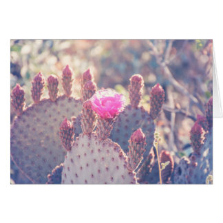 Prickly Pear Blossom | Greeting Card
