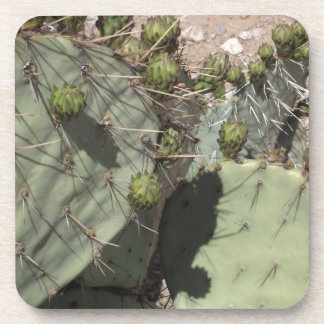 Prickly Pear Buds Drink Coasters