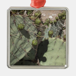 Prickly Pear Buds Silver-Colored Square Decoration