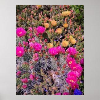 Prickly Pear Cacti Poster