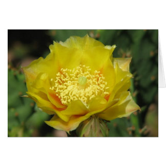 Prickly Pear Cactus Bloom Cards