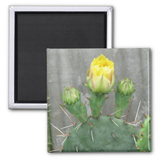Prickly Pear Cactus Bloom Refrigerator Magnets