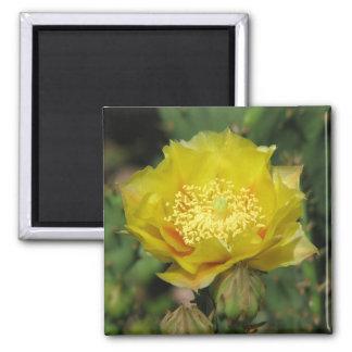 Prickly Pear Cactus Bloom Magnet