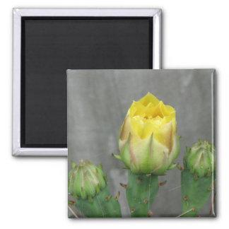 Prickly Pear Cactus Bloom Fridge Magnets
