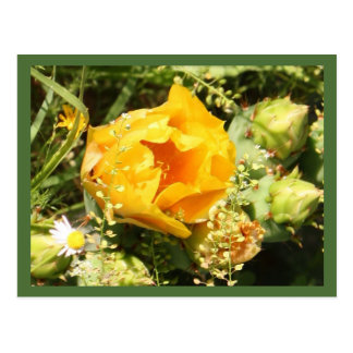 Prickly Pear Cactus Bloom Postcard