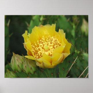 Prickly Pear Cactus Bloom Print