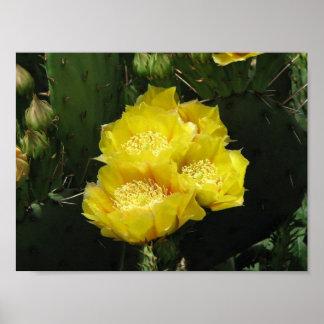 Prickly Pear Cactus Blooms Print